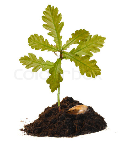 Ağaç Eken Adam